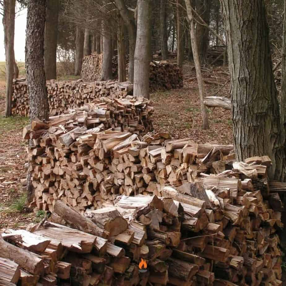 Image of split fire wood stacked between trees