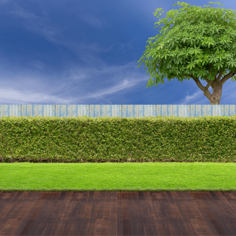 Image of a backyard lawn, deck, fence, and tree